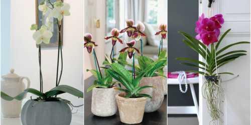 Как правильно ухаживать за орхидеей, осуществляем