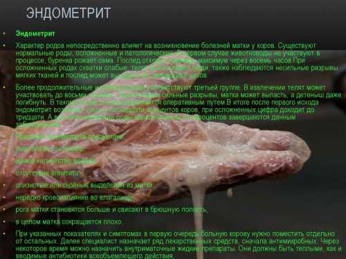Послеродовой эндометрит, эндометрит после родов