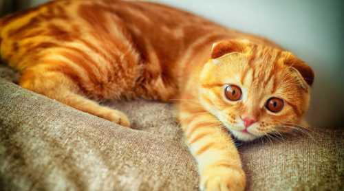 К чему снится рыжий котёнок: толкование сна про