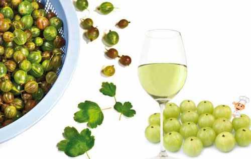 Рецепты вина из крыжовника, секреты выбора