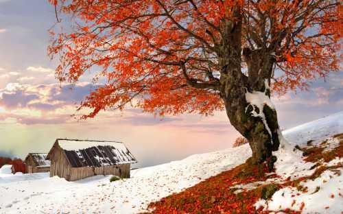 Волшебная осень и яркая зима 2018
